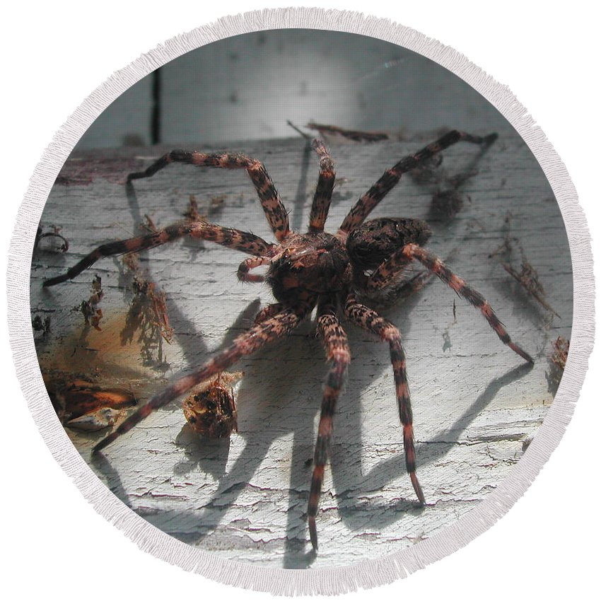 Nature Round Beach Towel featuring the photograph Wolf Spider Sunlight by Steven Scanlon