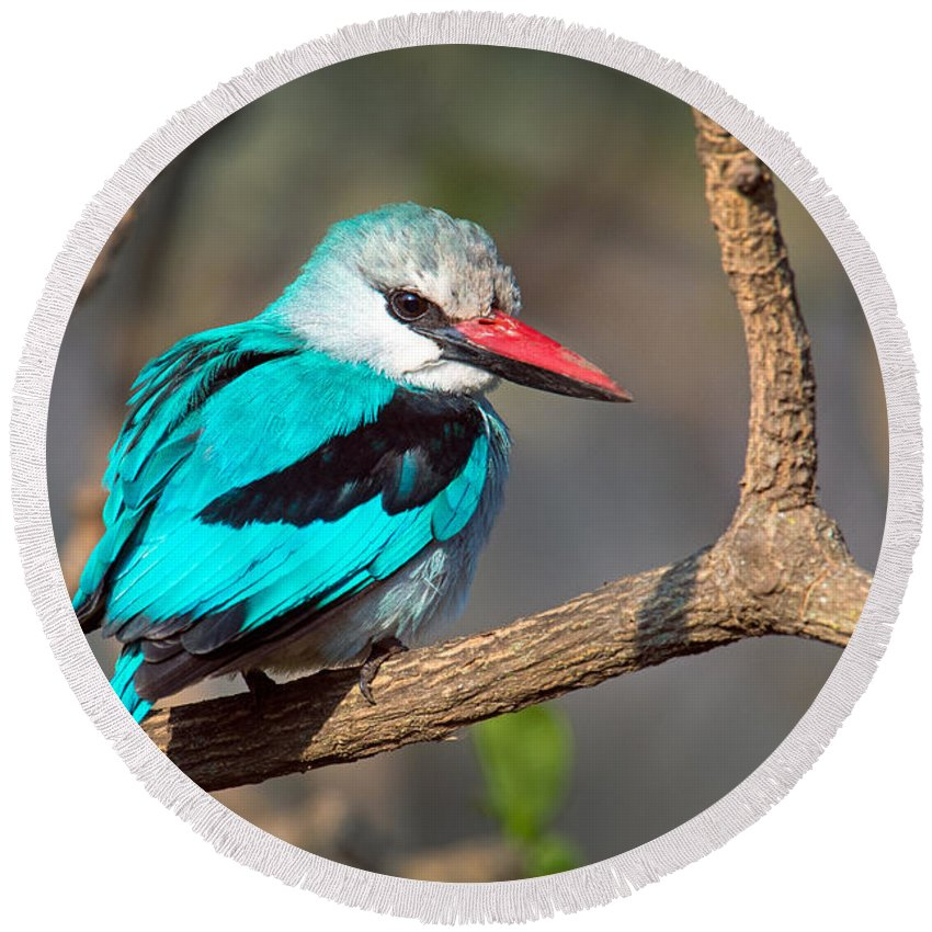 Photography Round Beach Towel featuring the photograph Woodland Kingfisher Halcyon by Panoramic Images