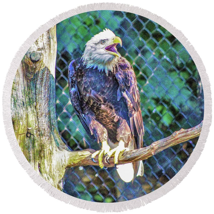 Eagle Round Beach Towel featuring the photograph Woodlands Nature Station by Chad Fuller