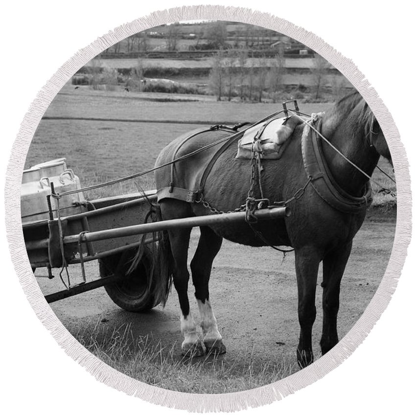 Cart Round Beach Towel featuring the photograph Work Horse And Cart by Gaspar Avila