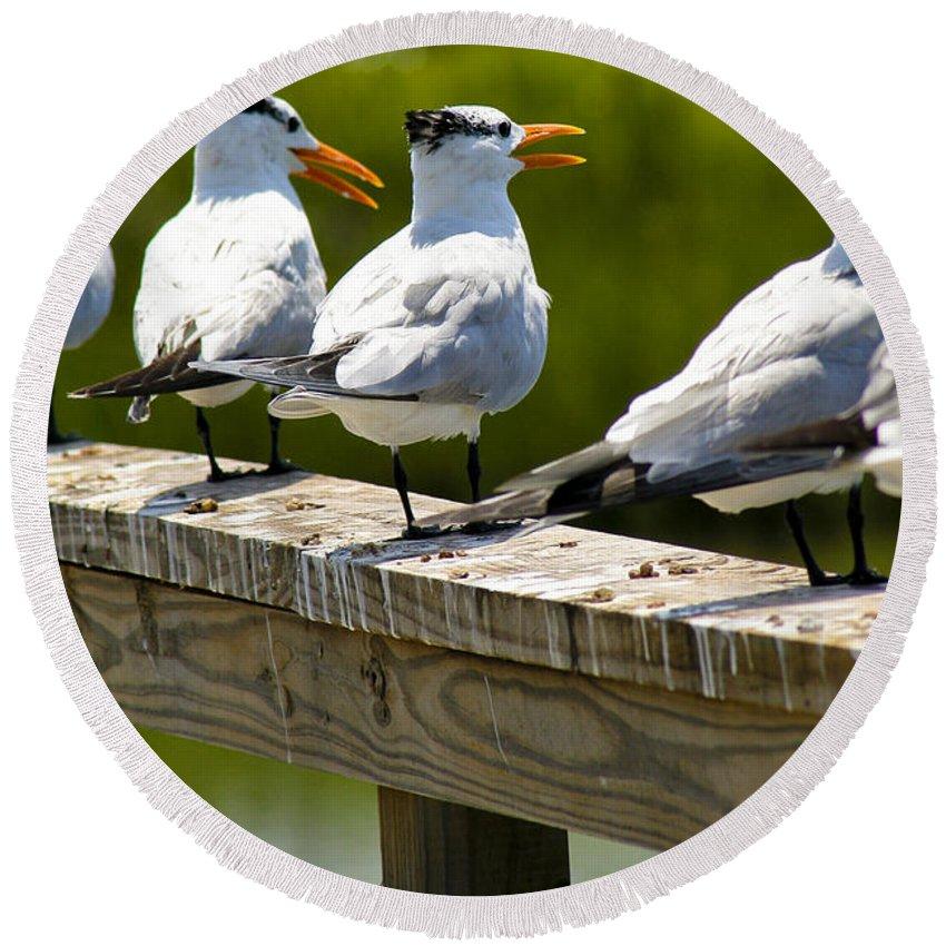 Bird Round Beach Towel featuring the photograph Yackety Yackety by Marilyn Hunt