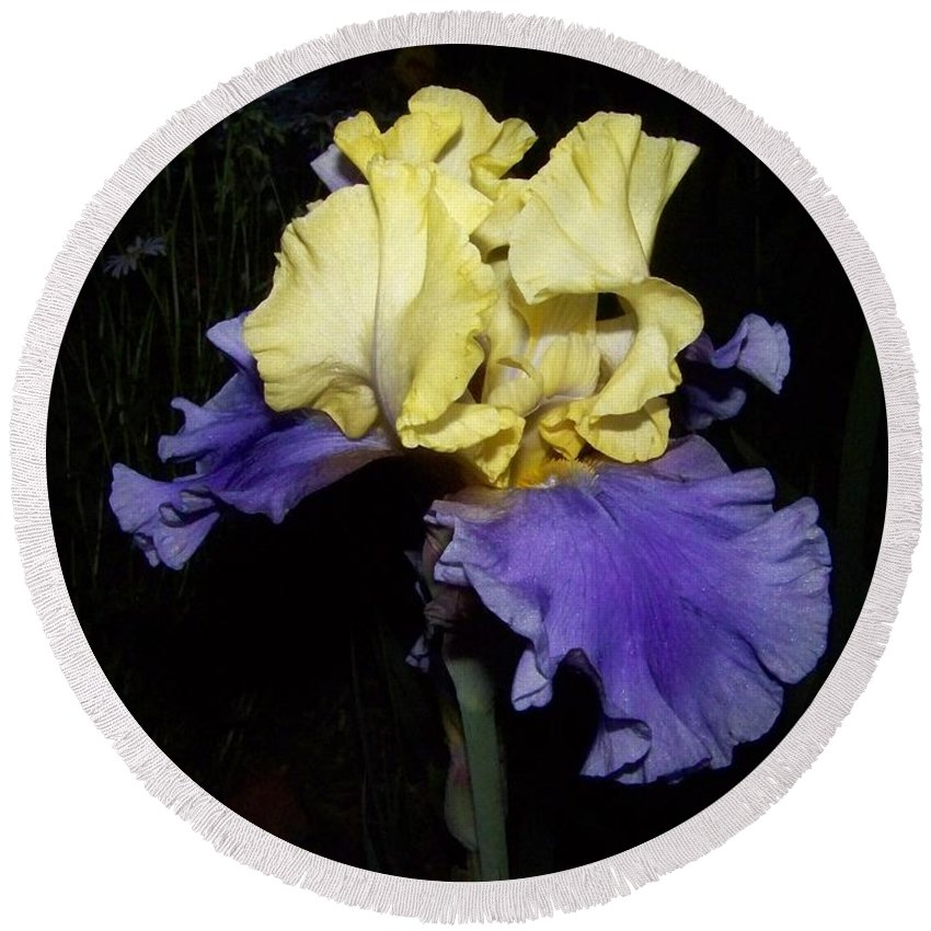 Iris Round Beach Towel featuring the photograph Yellow And Blue Iris by Kathy McClure