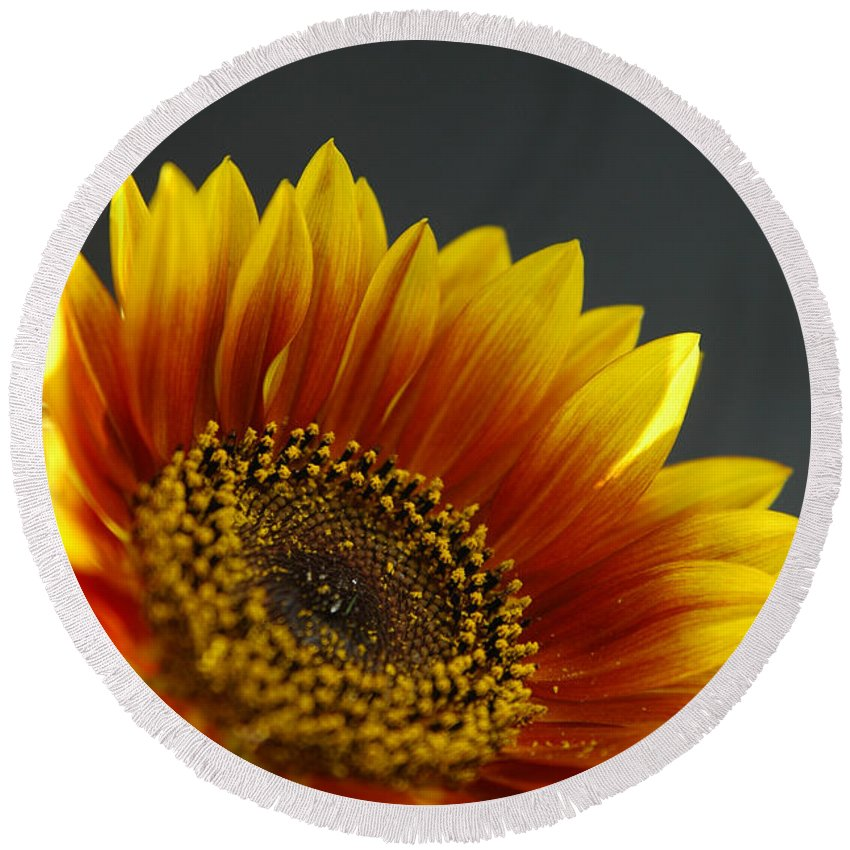 Yellow Round Beach Towel featuring the photograph Yellow And Orange Gerber by Ilan Amihai