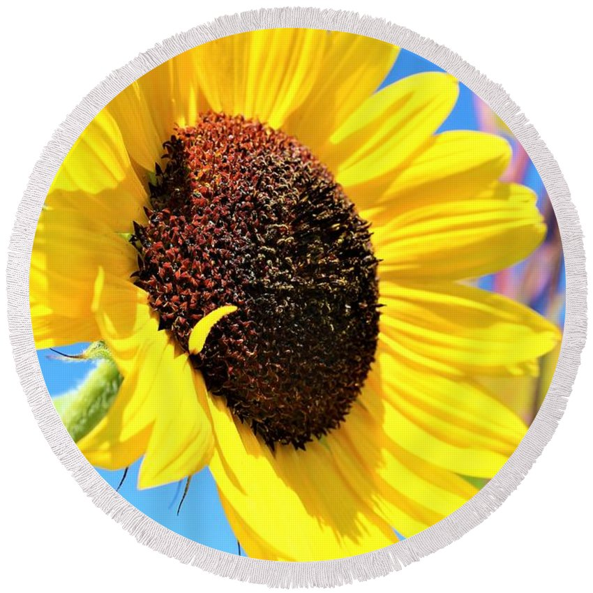 Sun Flower Round Beach Towel featuring the photograph Yellow Beauty by Claudette Letendre