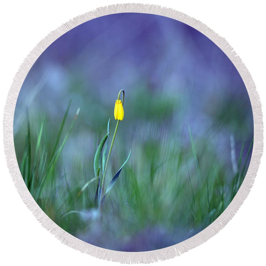 Montana Round Beach Towel featuring the photograph Yellow Bells by Whispering Peaks Photography