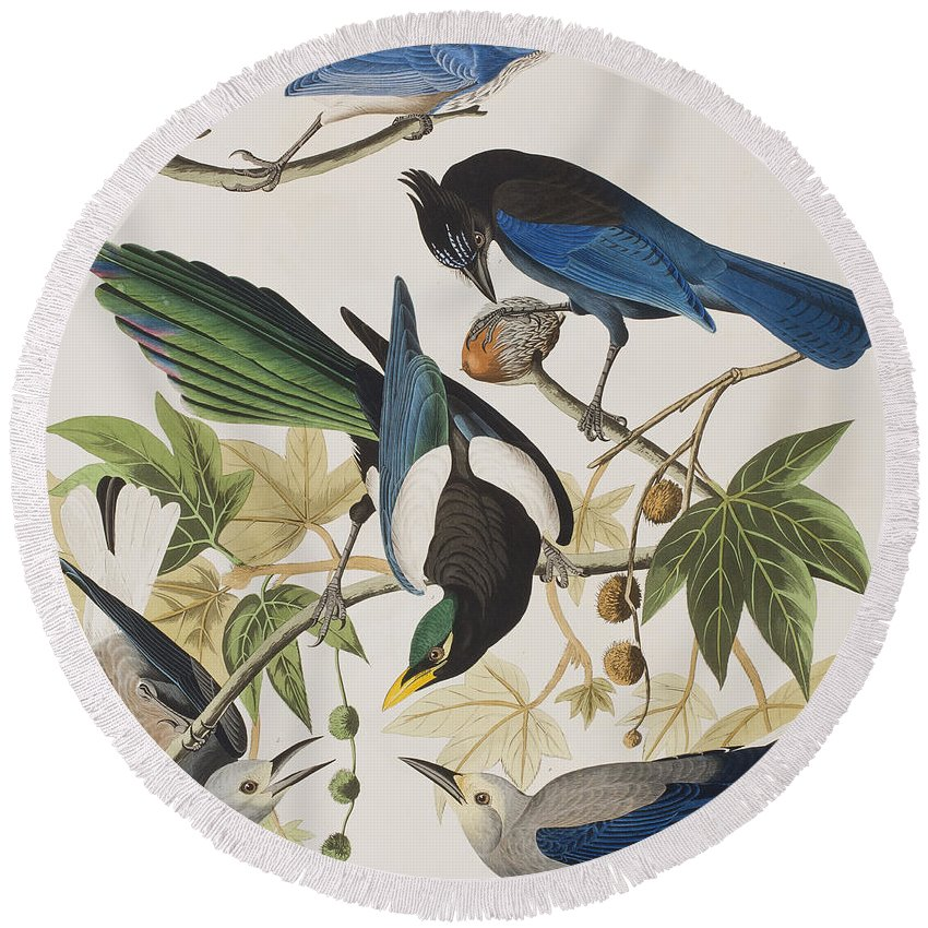 Yellow Round Beach Towel featuring the painting Yellow-billed Magpie Stellers Jay Ultramarine Jay Clark's Crow by John James Audubon