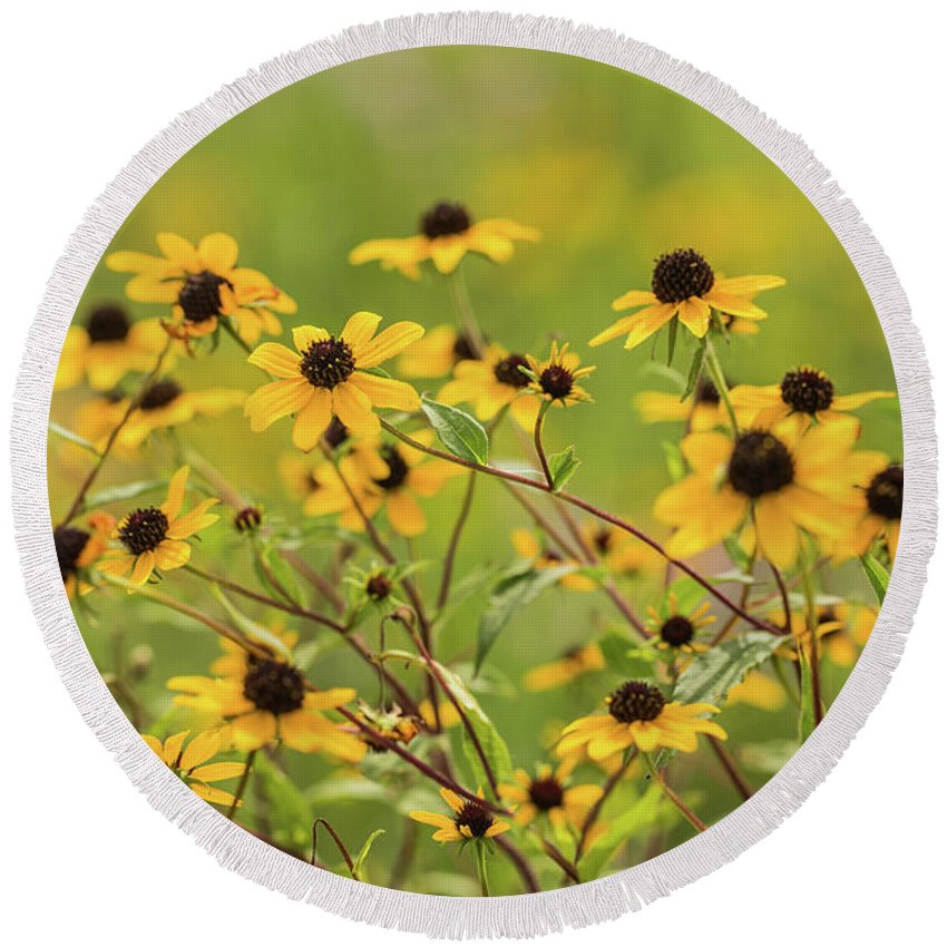 August Round Beach Towel featuring the photograph Yellow Black Eyed Susan Wildflowers In Summer by Carol Mellema