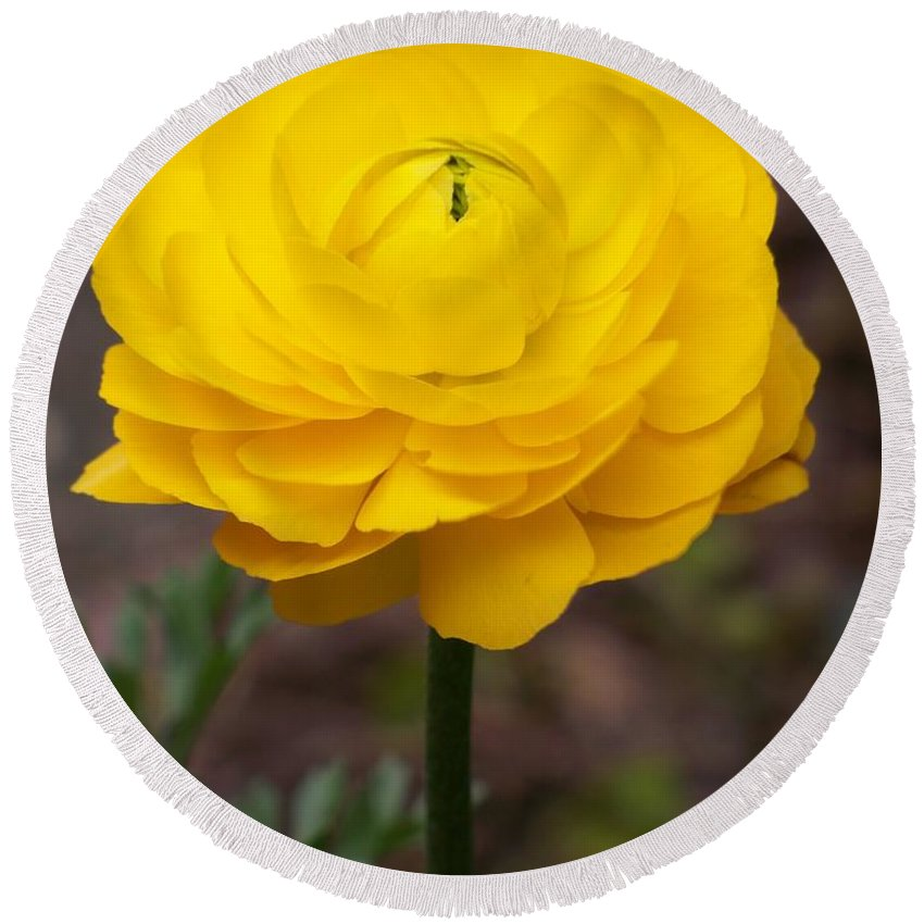 Nature Round Beach Towel featuring the photograph Yellow Bloom by Jerilyn Ezinga