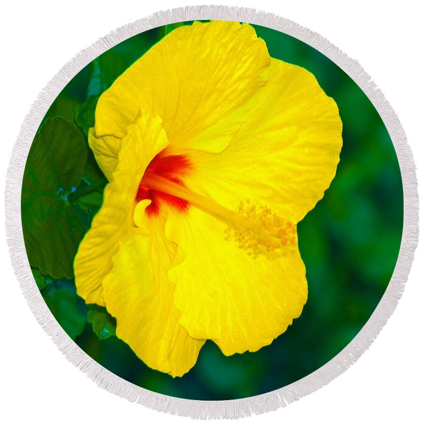 Flower Round Beach Towel featuring the photograph Yellow Blossom by Athala Carole Bruckner