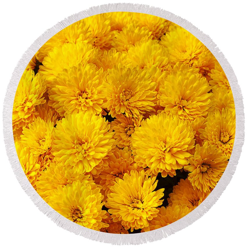 Flower Round Beach Towel featuring the photograph Yellow Chrysanthemums by Louise Heusinkveld