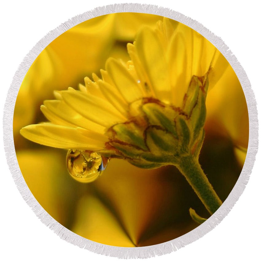 Flowers Round Beach Towel featuring the photograph Yellow Drip by Linda Sannuti