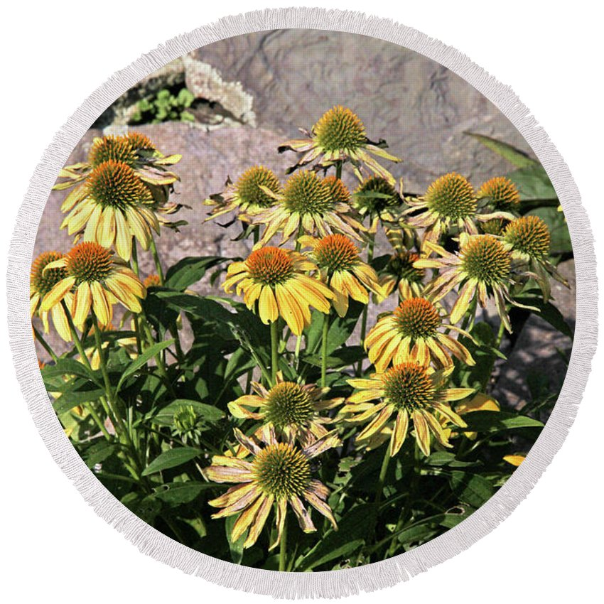 Yellow Echinacea Round Beach Towel featuring the photograph Yellow Echinacea, Straw Flowers Gray Stone Background 2 9132017 by David Frederick
