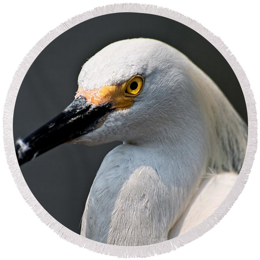 Snowy Egret Round Beach Towel featuring the photograph Yellow Eye by Christopher Holmes