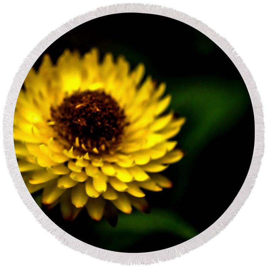 Agriculture Round Beach Towel featuring the photograph Yellow Flower 6 by Jijo George