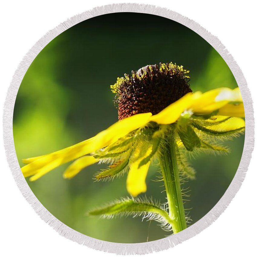 Yellow Round Beach Towel featuring the photograph Yellow Flower In Sunlight by Amy Patterson