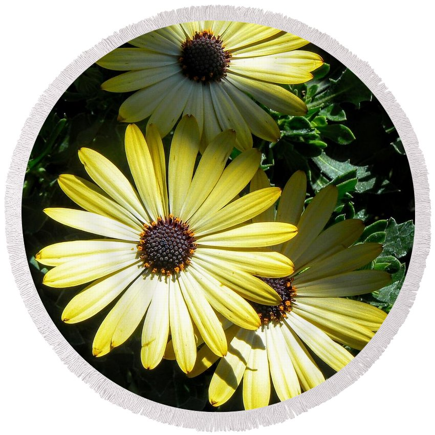 Yellow Round Beach Towel featuring the photograph Yellow Flowers by Rincon Road Photography By Ben Petersen