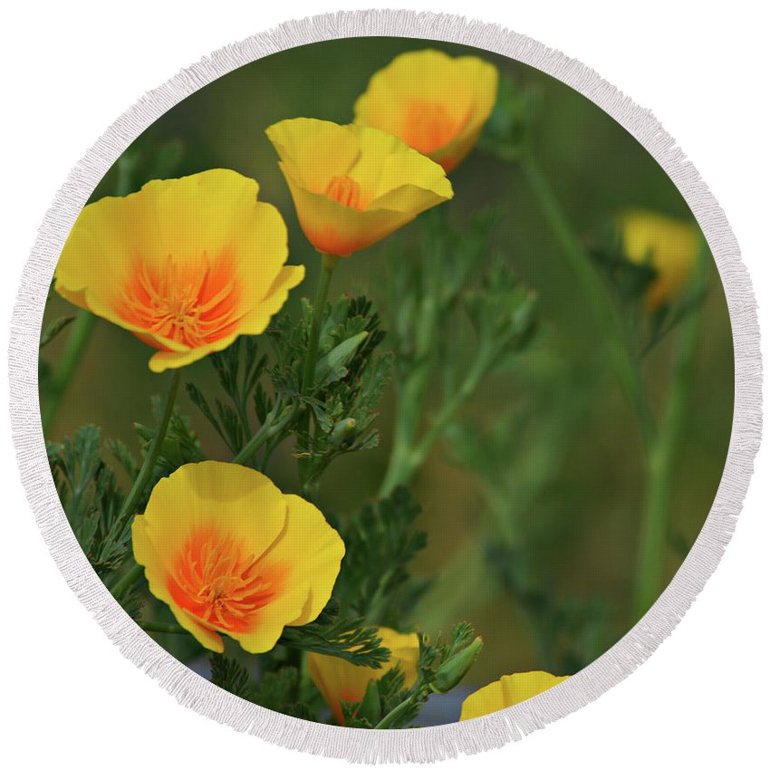 Yellow Round Beach Towel featuring the photograph Yellow Flowers by Scott Sawyer