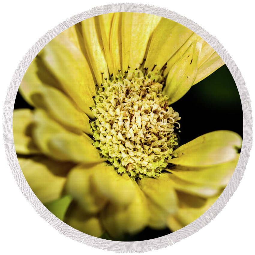 Flowers Round Beach Towel featuring the photograph Yellow Gerbera by Redjule Photography