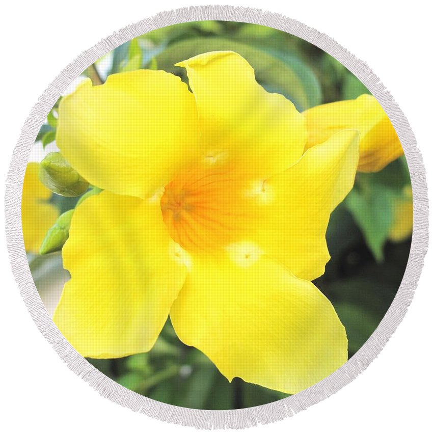Yellow Round Beach Towel featuring the photograph Yellow Hibiscus St Kitts by Ian MacDonald