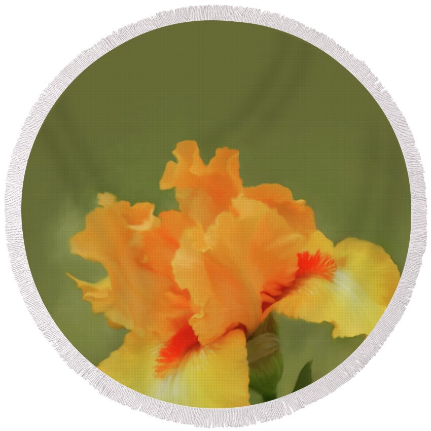 Floral Round Beach Towel featuring the photograph Yellow Iris Pillow by Lisa Cassinari