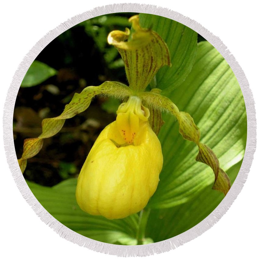 Orchid Round Beach Towel featuring the photograph Yellow Lady's Slipper by Nelson Strong