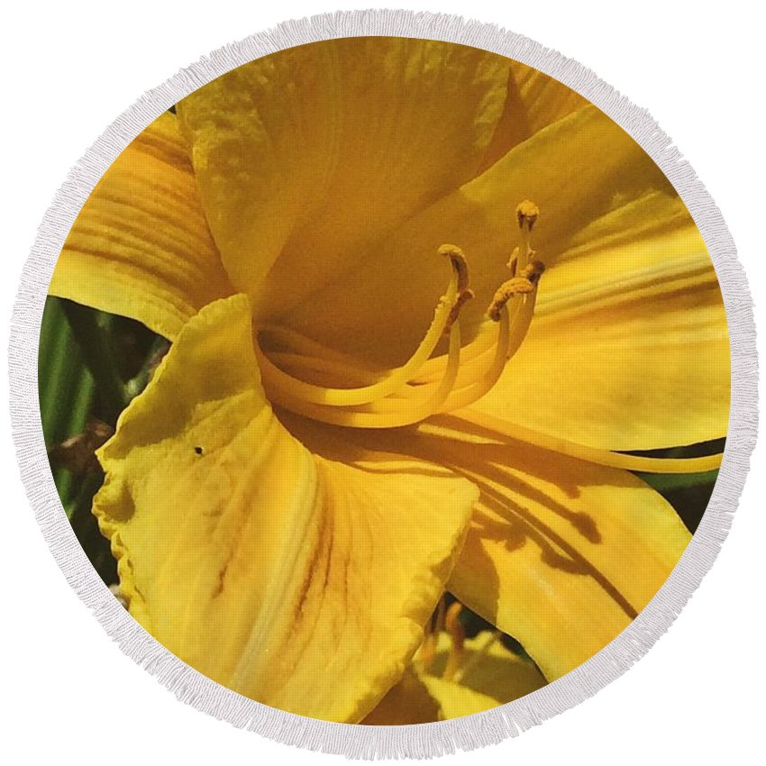 Yellow Lily Round Beach Towel featuring the photograph Yellow Lily Shines Brightly by Robin Maria Pedrero