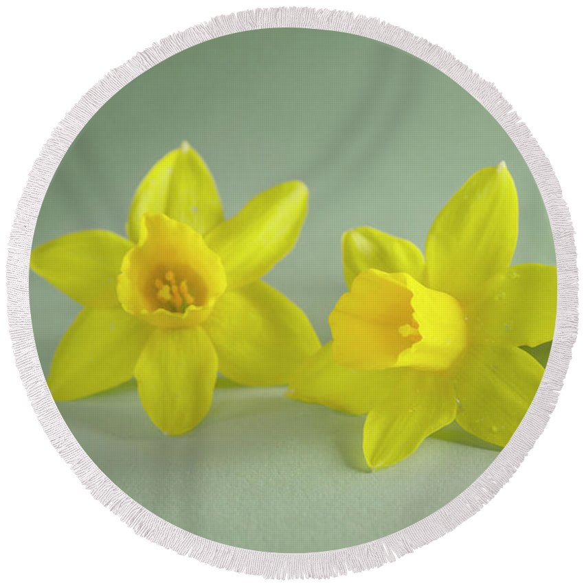 Yellow Mini Narcissus Round Beach Towel featuring the photograph Yellow Mini Narcissus by Iris Richardson
