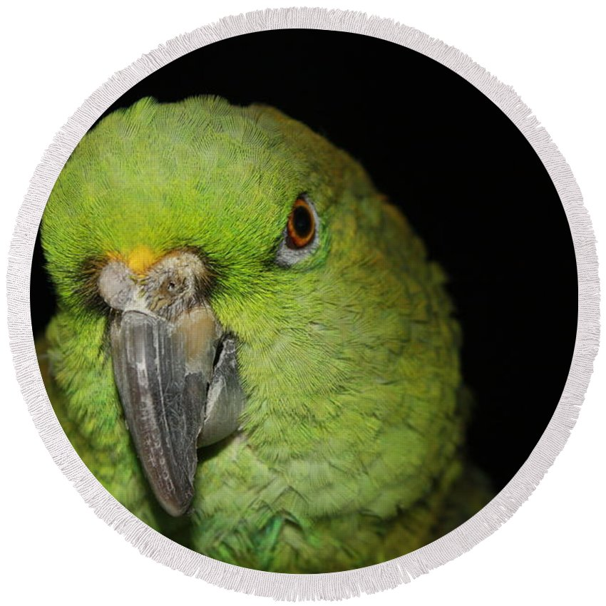Yellow Round Beach Towel featuring the photograph Yellow-naped Amazon Parrot by Alexander Butler