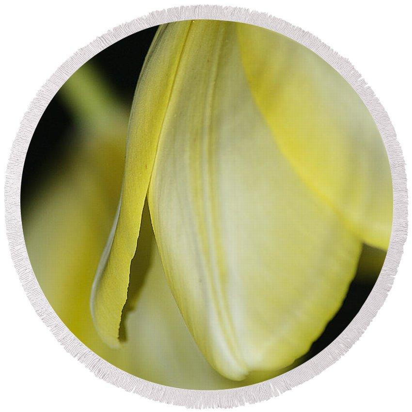 Tulip Round Beach Towel featuring the photograph Yellow Petals by Deborah Benoit