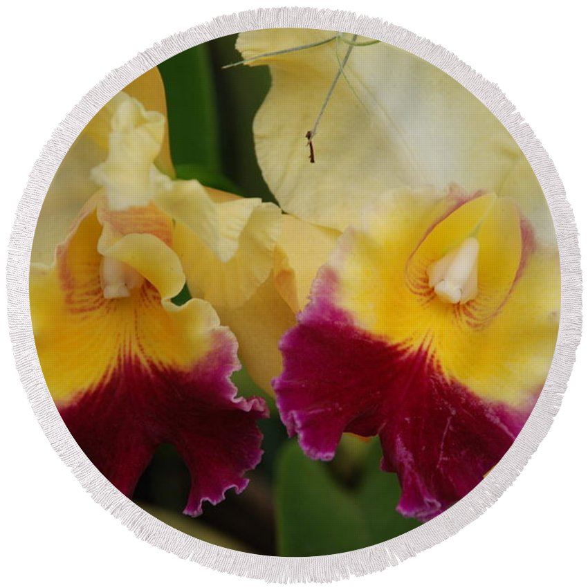 Macro Round Beach Towel featuring the photograph Yellow Purple Orchids by Rob Hans