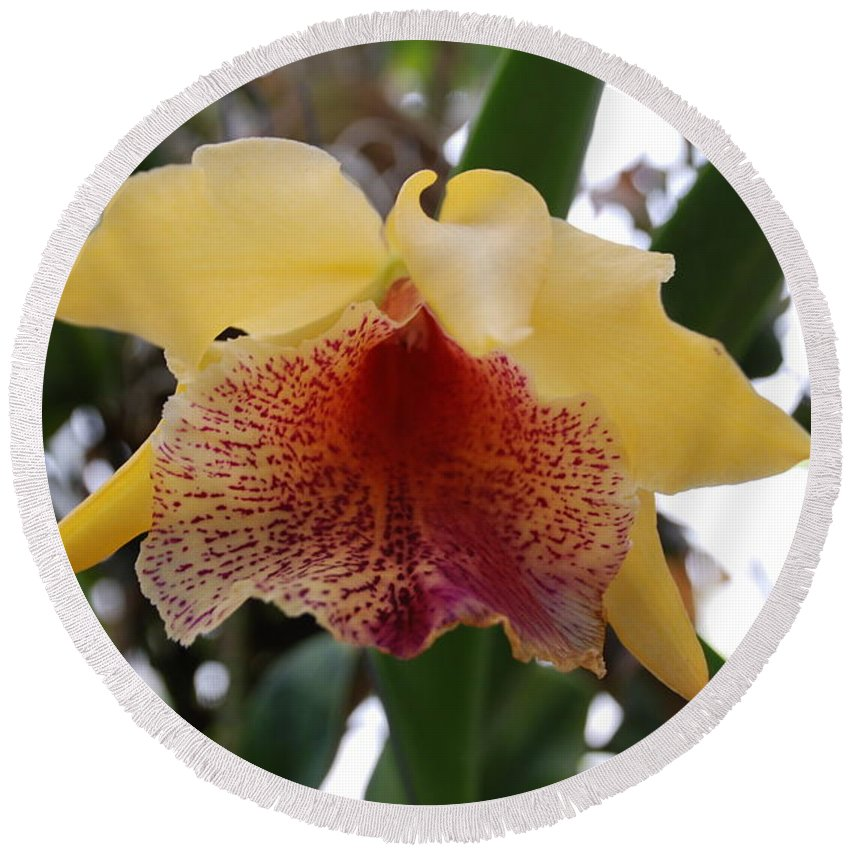 Macro Round Beach Towel featuring the photograph Yellow Red Orchid by Rob Hans