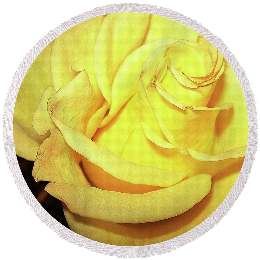 Yellow Round Beach Towel featuring the photograph Yellow Rose For Friendship by Jolanta Anna Karolska