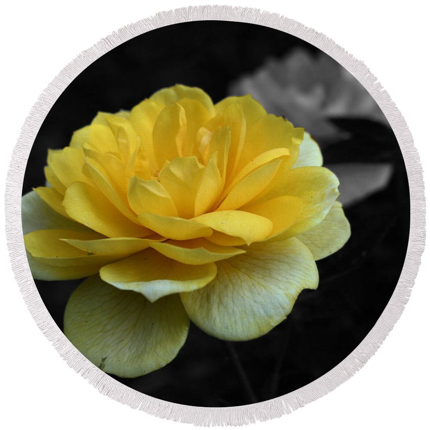 Rose Round Beach Towel featuring the photograph Yellow Rose In Bloom by Smilin Eyes Treasures