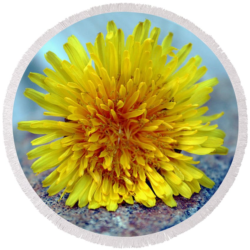 Flower Wild Nature Yellow Rock Blue Spring Macro Close Up Round Beach Towel featuring the photograph Yellow Spring by Linda Sannuti