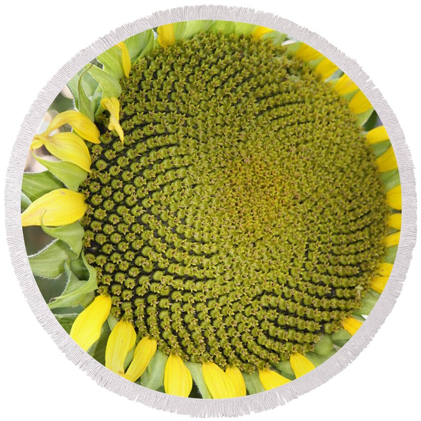 Flower Round Beach Towel featuring the photograph Yellow Sunflower by Christiane Schulze Art And Photography