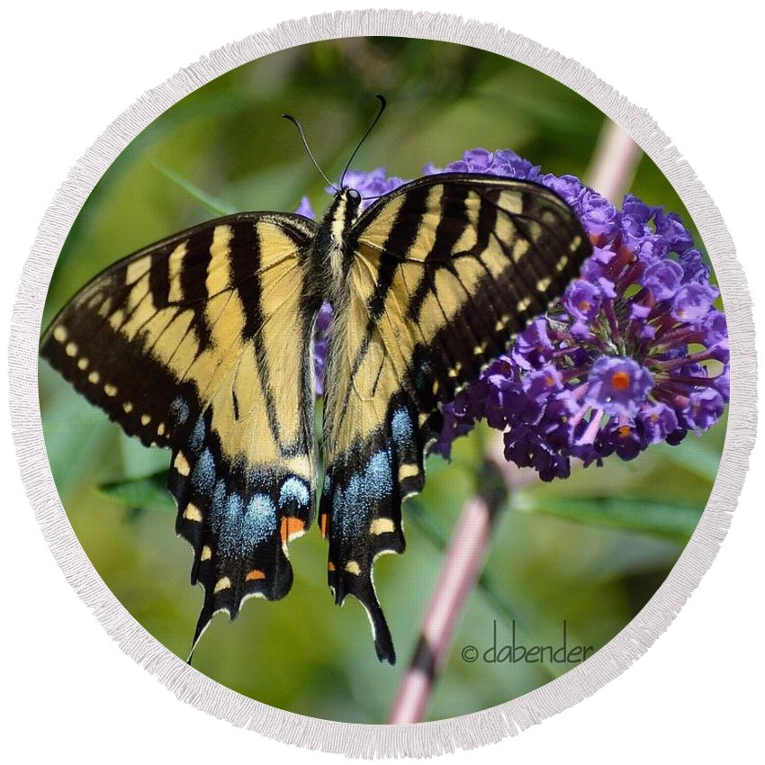 Gardening Round Beach Towel featuring the photograph Yellow Swallowtail Butterfly Two by Debra Bender