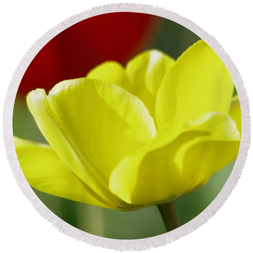 Tulip Round Beach Towel featuring the photograph Yellow Tulip by Jeff Swan