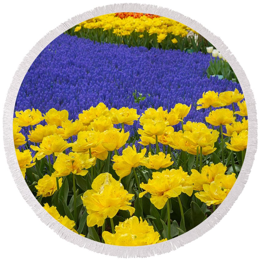 Holland Round Beach Towel featuring the photograph Yellow Tulips And Blue Muscari In Dutch Garden by Anastasy Yarmolovich