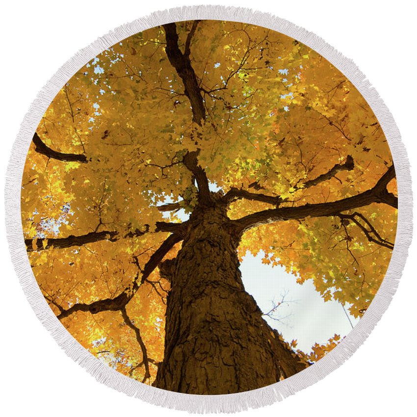 Maple Round Beach Towel featuring the photograph Yellow Up by Steve Stuller