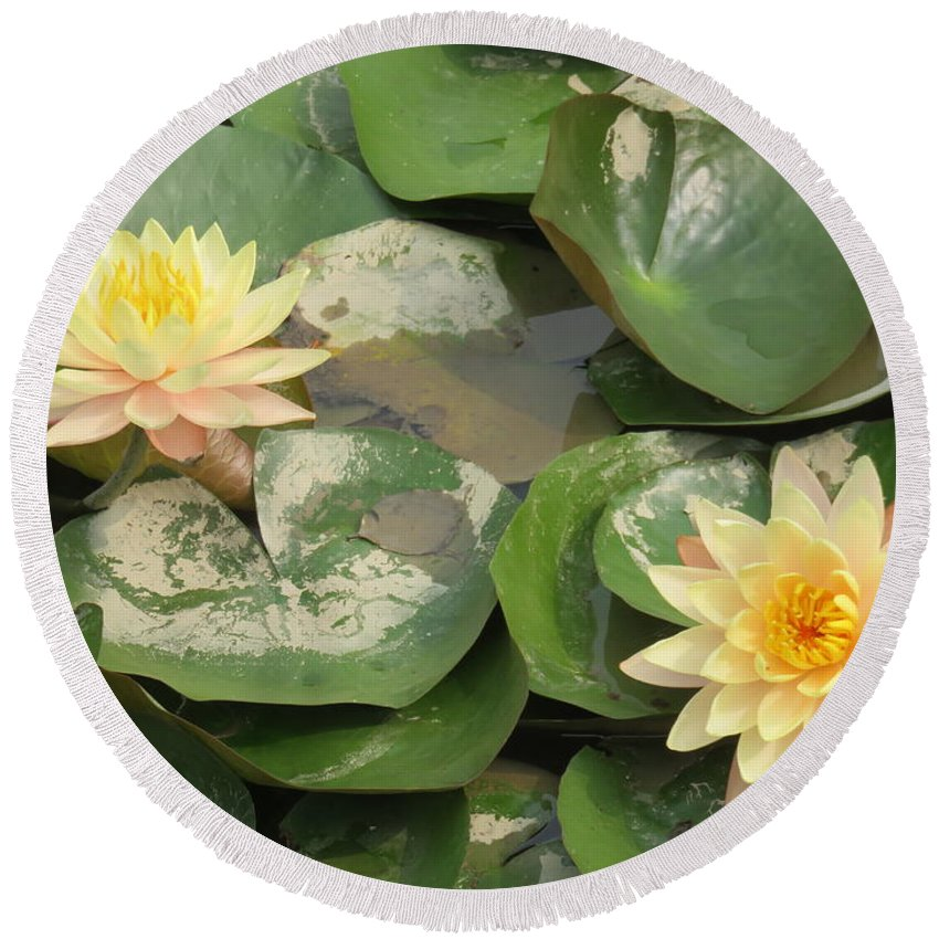 Flowers Round Beach Towel featuring the photograph Yellow Water Lillies by Mikhael van Aken