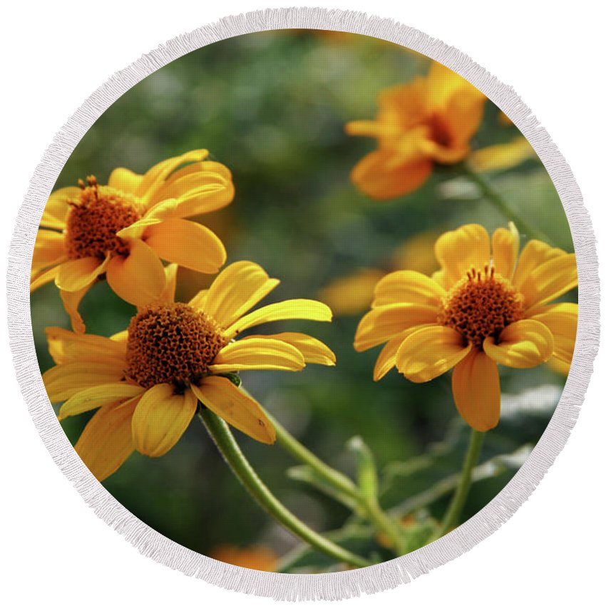 Yellow Round Beach Towel featuring the photograph Yellow Wildflowers 3680 H_2 by Steven Ward