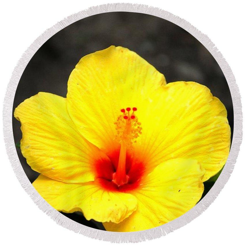 Digital Photo Round Beach Towel featuring the photograph Yellow Wonder by David Lane