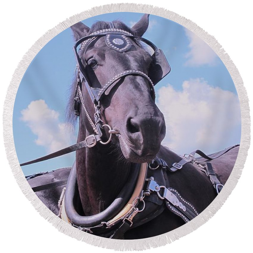 Percheron Round Beach Towel featuring the photograph Yes I Am The Most Beautiful by Ian MacDonald