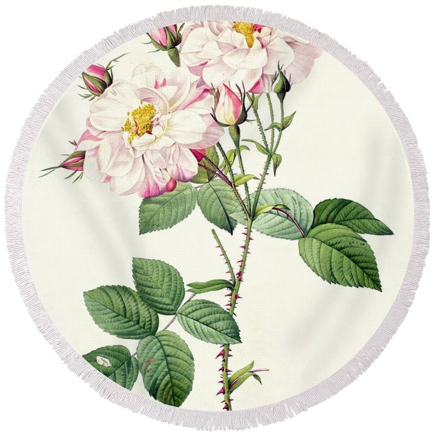 Rosa Round Beach Towel featuring the drawing York And Lancaster Rose by Pierre Joseph Redoute