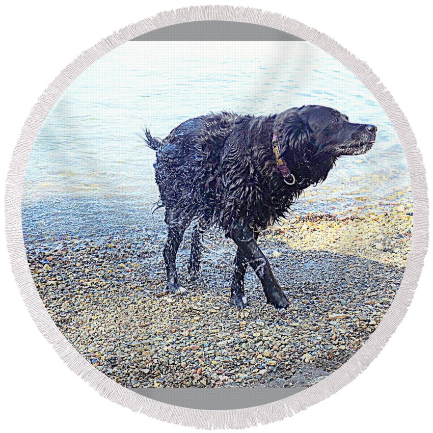 Dog Round Beach Towel featuring the photograph You Can Tell That I Just Love Bathing by Hilde Widerberg