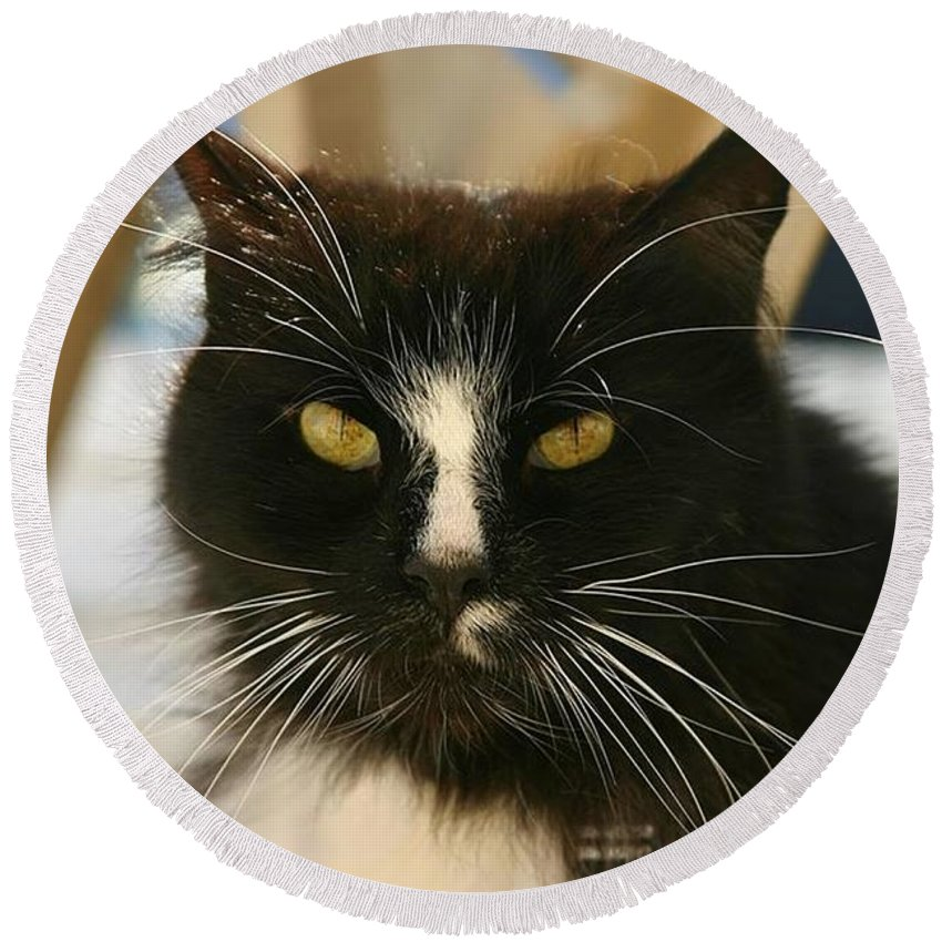 Cat Round Beach Towel featuring the photograph You Talkin To Me? by Pattie Frost