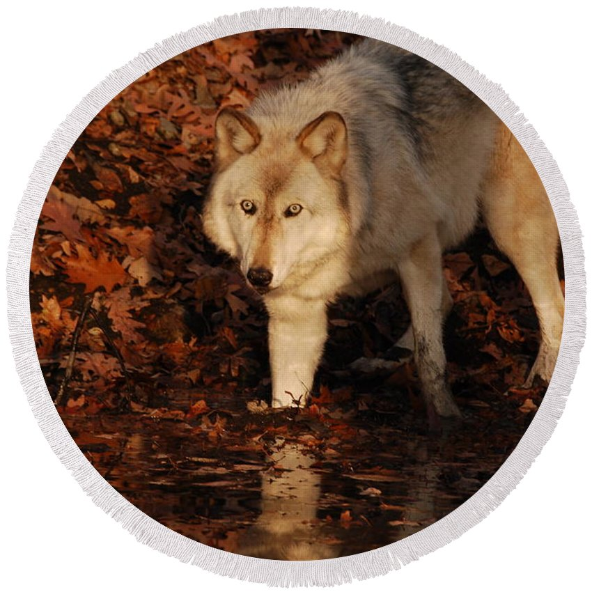 Wolf Round Beach Towel featuring the photograph You Want A Piece Of Me by Lori Tambakis