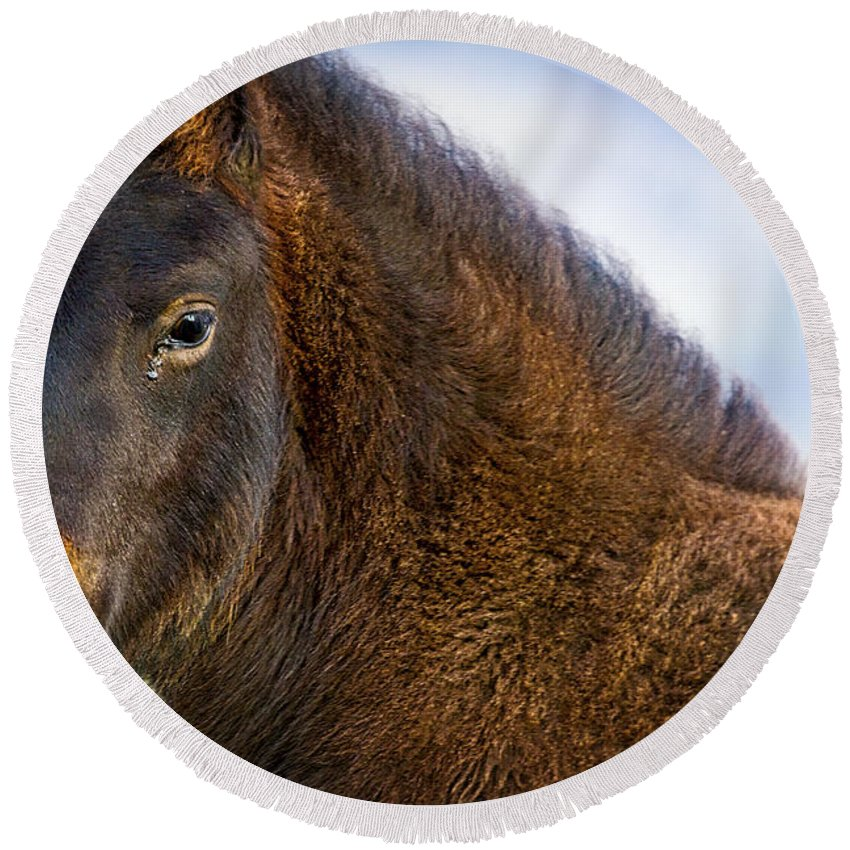 Horse Round Beach Towel featuring the photograph Young Icelandic Horse by Stuart Litoff