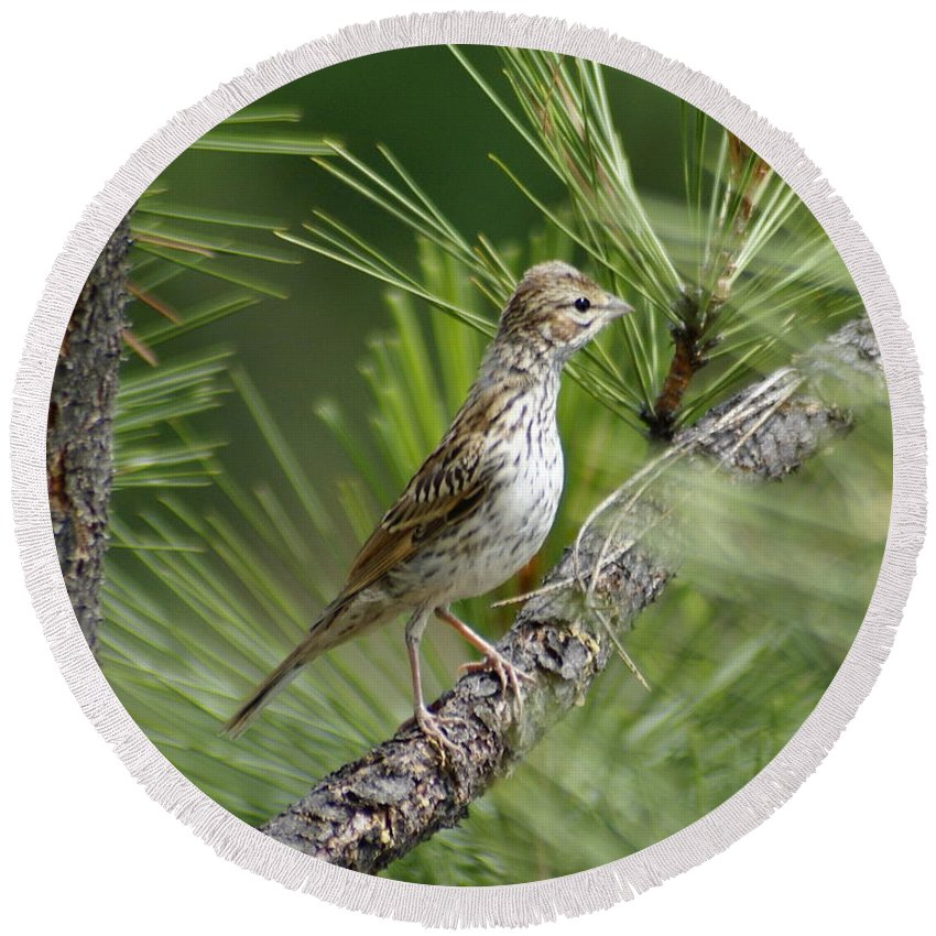 Birds Round Beach Towel featuring the photograph Young Lark Sparrow 1 by Ben Upham III