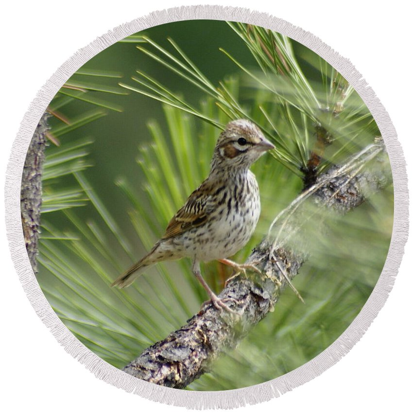 Birds Round Beach Towel featuring the photograph Young Lark Sparrow 2 by Ben Upham III